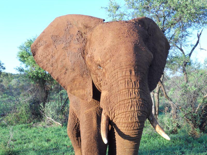 Madikwe Game Reserve 028