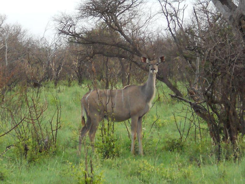 Madikwe Game Reserve 058