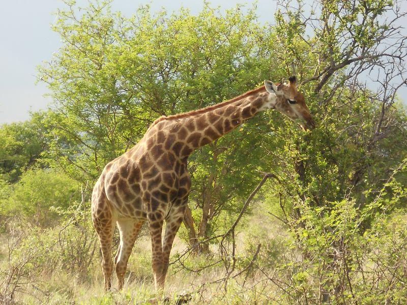 Madikwe Game Reserve 067