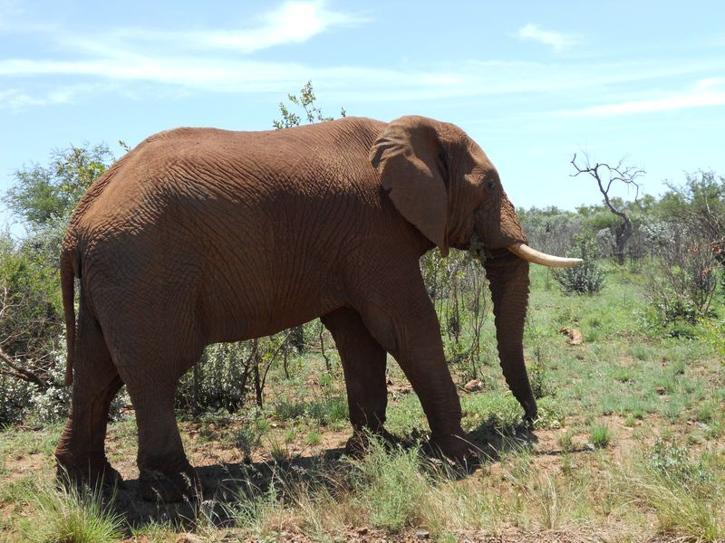 Madikwe Game Reserve 001