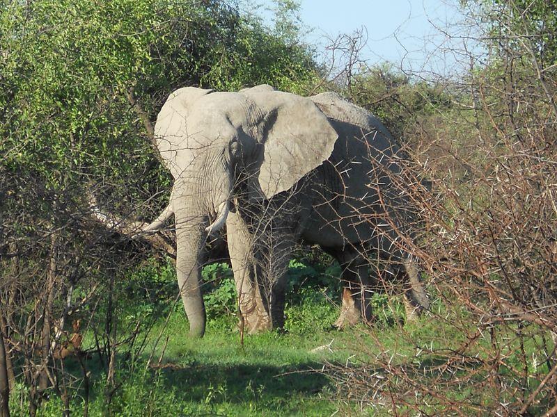 Madikwe Game Reserve 020
