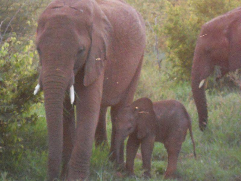 Madikwe Game Reserve 049