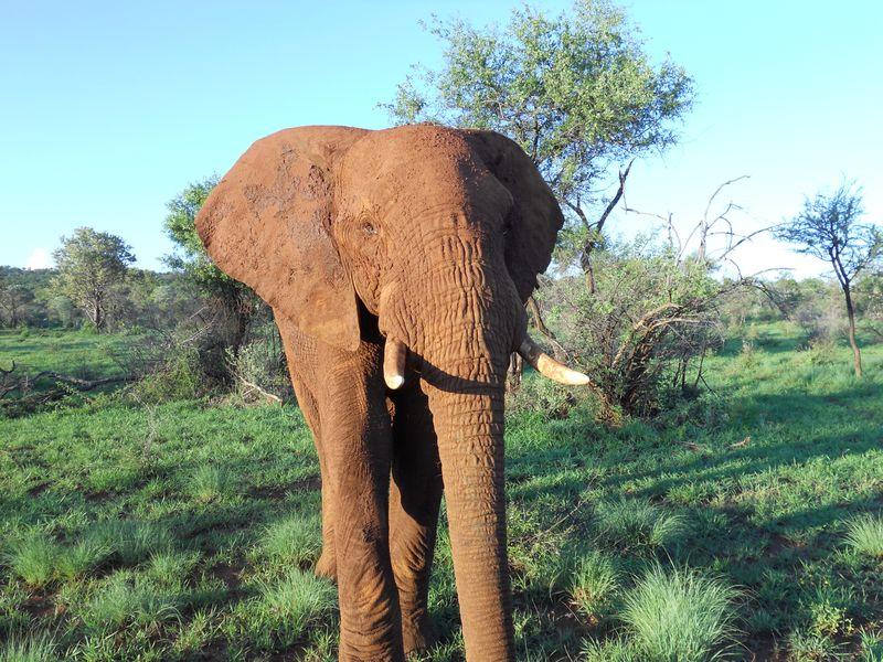 Madikwe Game Reserve 027