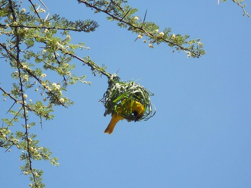 Madikwe Game Reserve 010