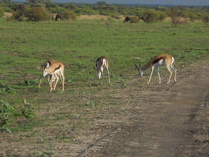 Madikwe Game Reserve 062