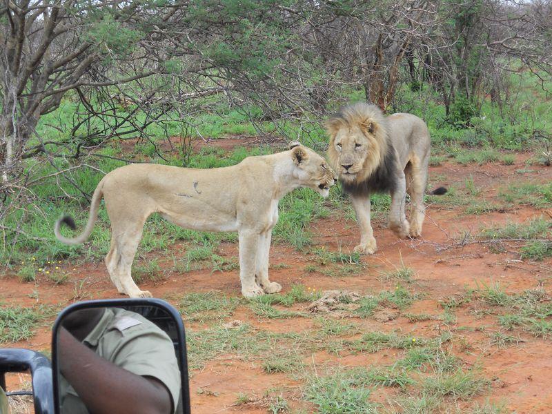 Madikwe Game Reserve 075