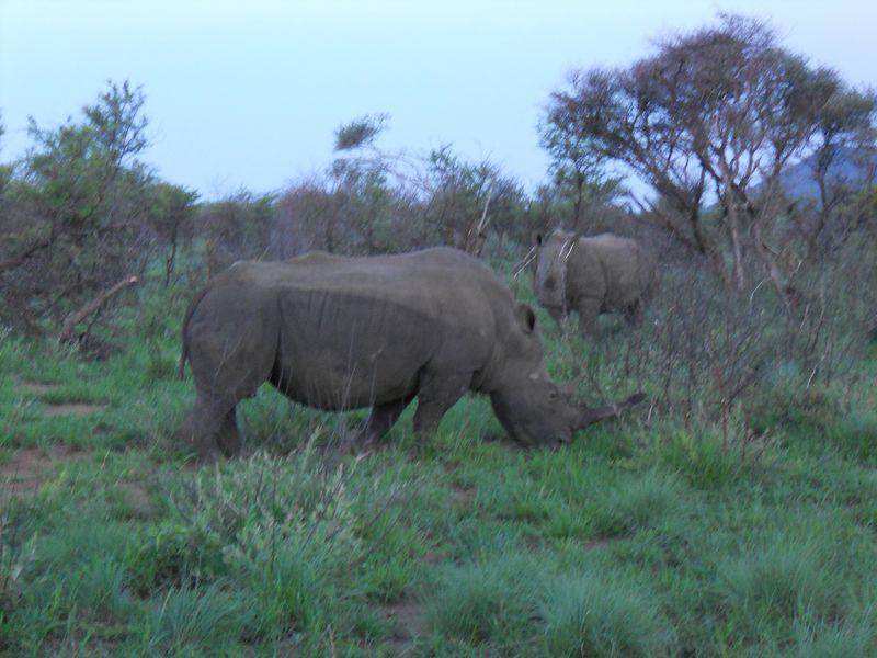 Madikwe Game Reserve 037