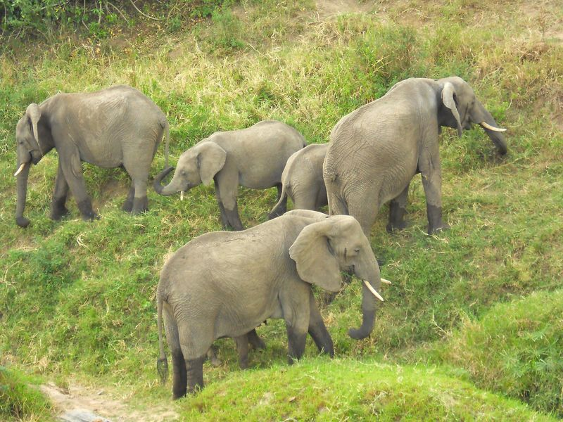 Masai Mara 117