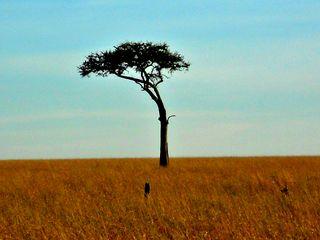 Masai Mara 099