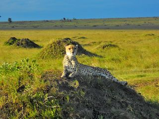 Masai Mara 070