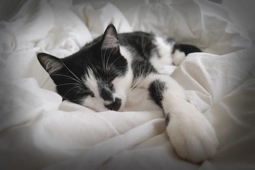Sleepypetey