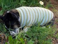 Regsweater1