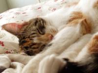 Sleepylucy